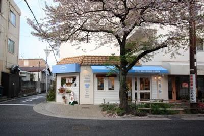 街路樹の桜 巨大です シーズンになると 桜があまりにもでかいため 桜のトンネルになります。